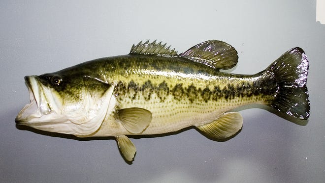 This is a finished piece, in this case a largemouth bass, created by Ray Grandner.