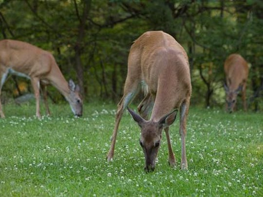 There will be two one-hour meetings to discuss bow hunting for deer in Manitowoc.