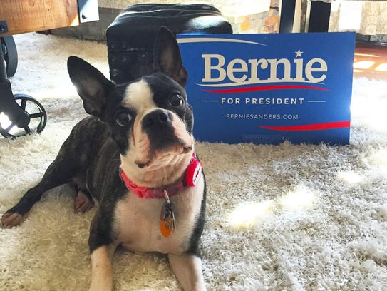 Gabby is a 4-year-old Boston Terrier who lives in New