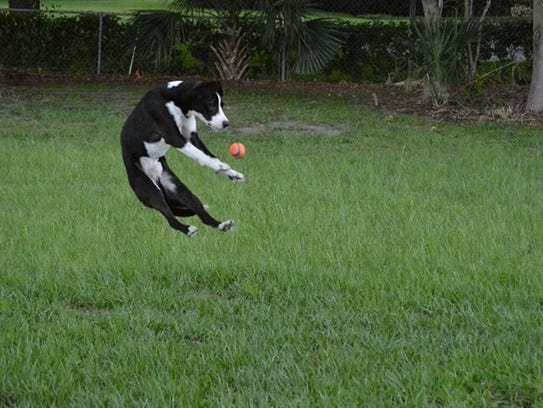 There will be plenty of fun and games at DogFest Orlando
