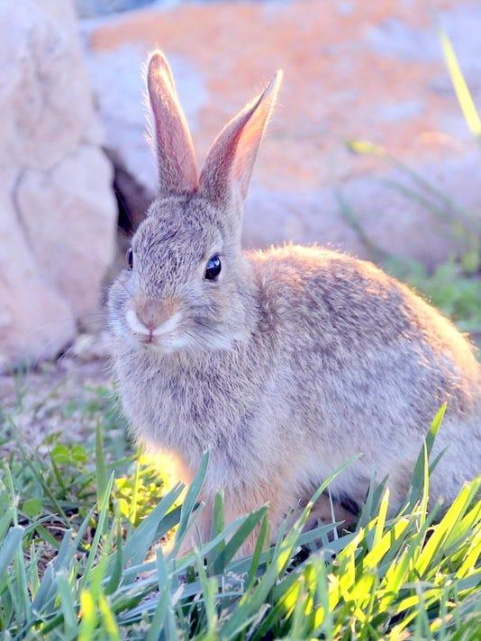 -bunny---david.jpg