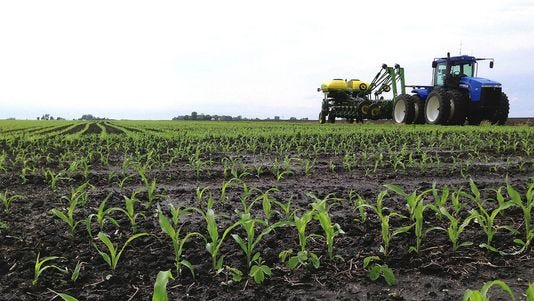 In this May 25, 2013 photo, recently planted corn grows is seen on a central Illinois farm field near Chandlerville, Ill. Falling corn prices and questions about ethanol demand could lead Illinois farmers to plant fewer acres of corn this year and instead are taking a closer look at soybeans this year.