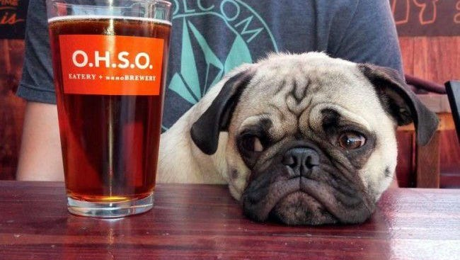 There are lots of dog-friendly breweries in NJ.