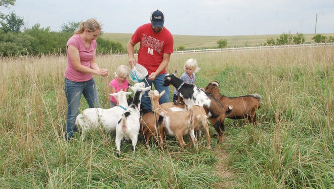 Angie and Blake Meyer and their twin daughters, Adalene and Ainsley, feed goats on their acreage near Lyons, Neb. About a year ago, Angie and her mother, Beth Reisz of Creighton, started making goat's milk soap, a project that's morphed into other products.