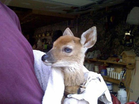 Dani, an orphan fawn, was rescued and nursed to health by an Connersville couple from 2010 to 2012. The DNR charged Jeff and Jennifer Counceller with illegally harboring the wild animal. News stories on Dani the deer published in January 2013 gained national attention. The charges were eventually dropped.