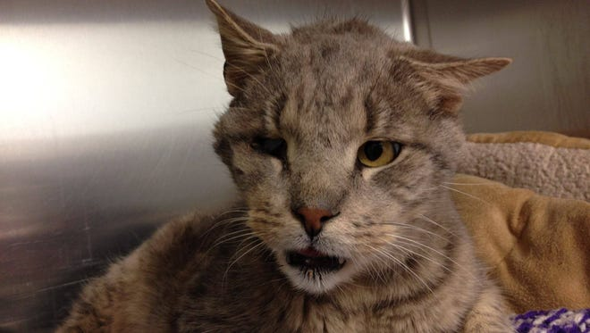 Zebediah looked like he had given up on life when he arrived at the Cumberland County Society for the Prevention of Cruelty to Animals. Instead, his journey to a forever home has inspired others to give a second chance to local cats who need a place to cal home.
