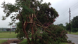 A crepe myrtle near Cape Charles is damaged after a severe storm passed through the area Thursday, July 24, 2014. Numerous injuries were reported at Cherrystone Campground as a result of the storm.