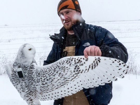A snowy owl named Buena Vista is held by Michael Lanzone