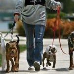 Dogs walking.