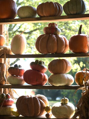Big, round pumpkins are great for jack-o-lantern carving, but Green Door Gourmet offers gourds in all shapes, sizes and flavors.