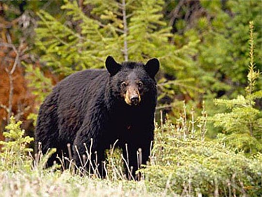 The 2018 Pennsylvania bear harvest was the lowest in 11 years.