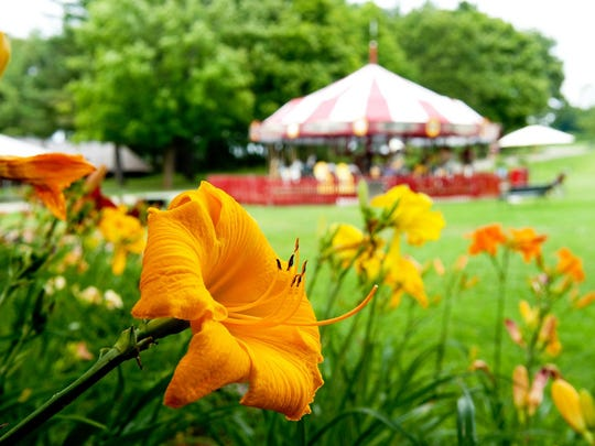 Daylilies bloom in the foreground on the grounds of the Shelburne Museum. In the background, a vintage carousel operates in warm weather outside the Circus Building.