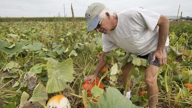 Doug Bartels takes a closer look at his pumpkins at his family farm on East Douglas Road.