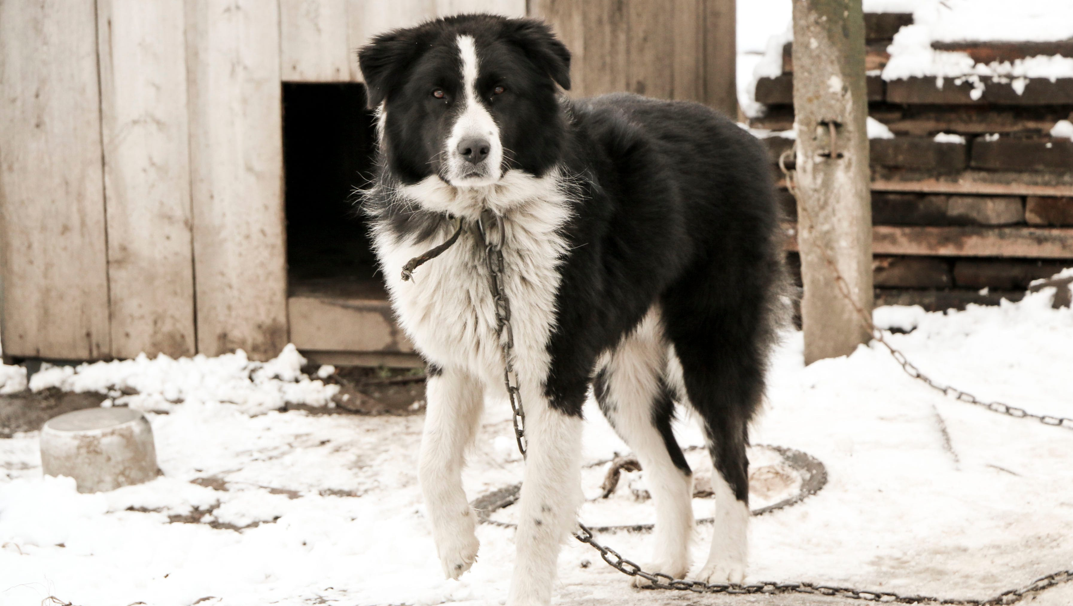 Pa Law Makes Leaving Dogs Outside In