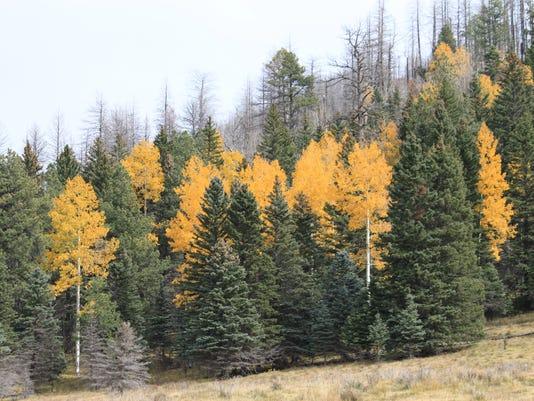 Southwest Fall Color_Bail-2.jpg