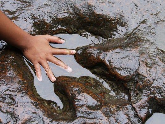 hand and dinosaur footprint .