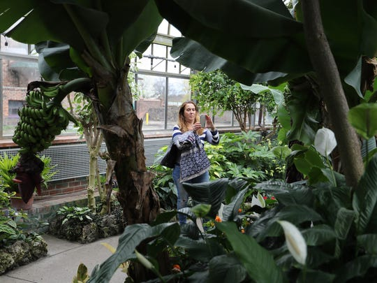 Sandy Vaselopulos from Niles, Illinois takes pictures in the Anna Scripps Whitcomb Conservatory on Belle Isle Friday, April 21, 2017.