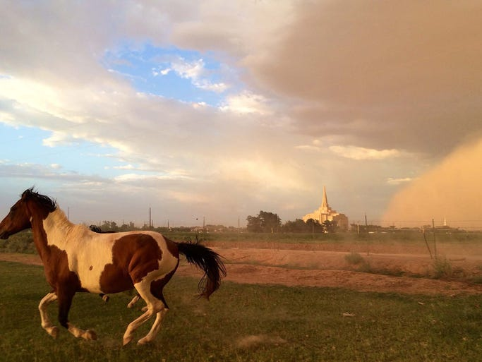 Horses gallop in a field in Gilbert, Arizona as a dust storm approaches on July 3, 2014.
