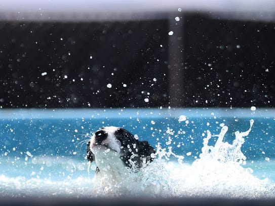 A dog splashes after attempting a long jump in Dogtown