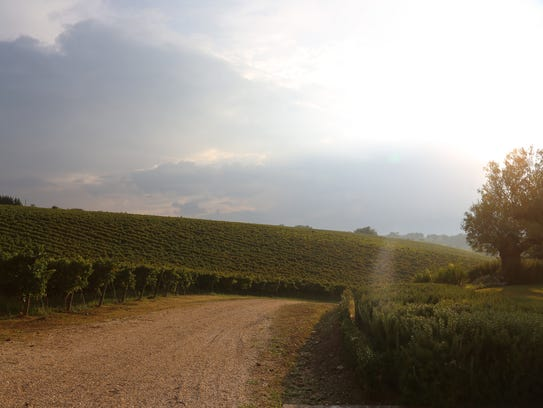 Montepulciano vineyards at Marramiero Winery in the