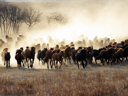 "Shanghai-born New York photographer, graphic designer, print designer, and advertising executive Jack Lee took this photo ""Full Steam Ahead"" on an Inner Mongolian prairie in Chifeng, where Qing emperors autumnally enjoyed horseback riding. Lee's work will be a part of the ""Nature Through the Lens"" exhibit at Rainforest Art Foundation Feb 1-April 7."
