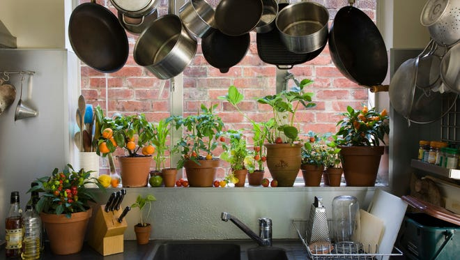Houseplants require special care to survie the winter.