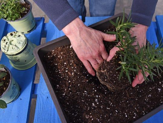 "Improved potting soils hold moisture better and longer than our ""dirt."""