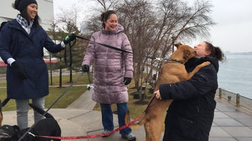 Islar, a 2-year-old Pitt mix, jumps up to smootch Detroit resident Cynthia Fitch during Canine to Five's Winter Pack Walk at Rivard Plaza on Detroit's riverfront.