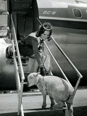 """""""Come FLY with me!"""" During 1968 and 1969 Alice in Dairyland flew over 50,000 miles across the United States. Alice is wearing a fashionable dress made from the wool of high quality sheep just like her somewhat timid friend here."""