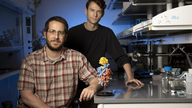 University of Texas associate professor Jason McLellan, left, and graduate student Daniel Wrapp pose next to a 3D model of the new coronavirus. Research from McLellan's team was a key piece in the development of four major vaccine candidates.