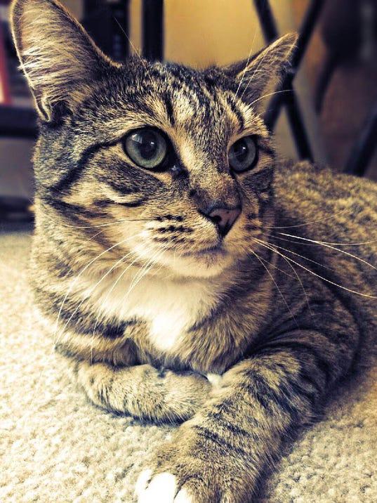 SAL0815-pet adopt 2