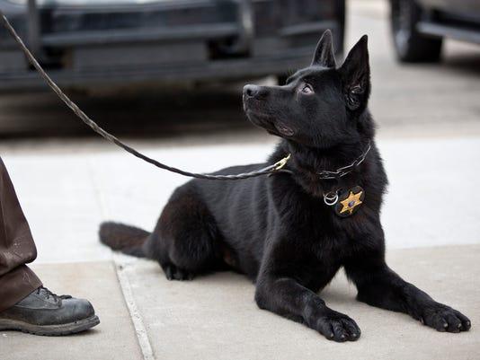 PTH1230 POLICE DOG