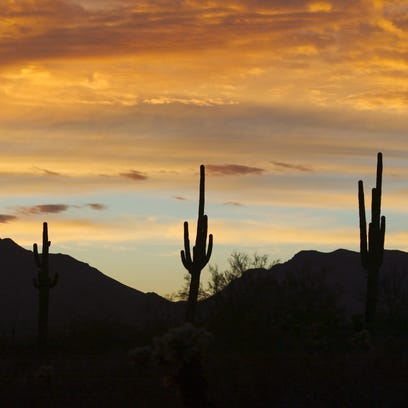 The saguaro cactus can only be found in the Sonoran
