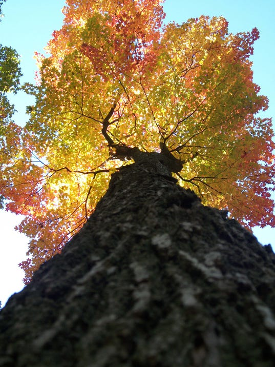 APC best places to see fall color lead.JPG