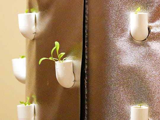 Plants grow out of the self-contained indoor garden