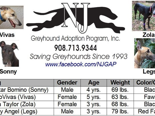 The New Jersey Greyhound Adoption Program (NJGAP) will