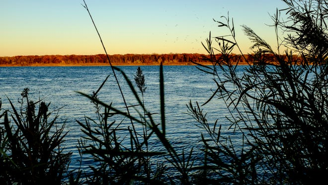 Invasive phragmites is seen growing along the shoreline of the St. Clair River. The U.S. has spent about $21 million on projects to improve and restore fish and wildlife habitat in and along the St. Clair River.