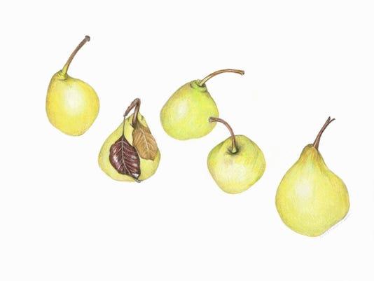 0303-Artist-Meade-pears.jpg