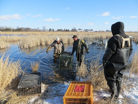 Duck Banding @ Pickerel Creek 2-26-14 sm.jpg
