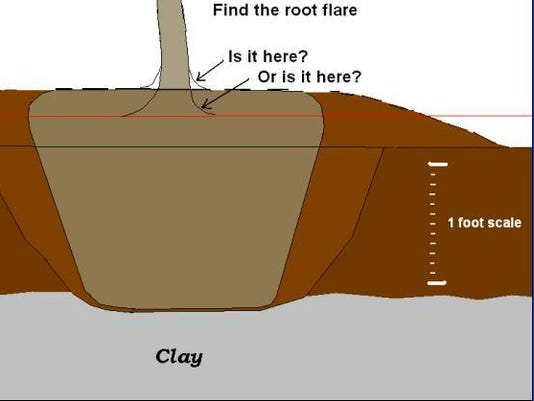 636203610991509780-1-root-flare1.jpg
