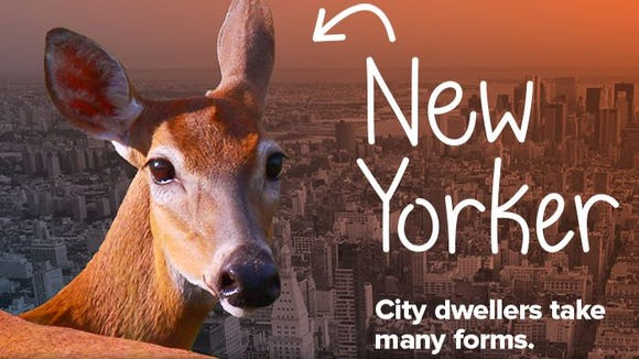 An example of the advertising New York City residents will see promoting the new WildlifeNYC program.