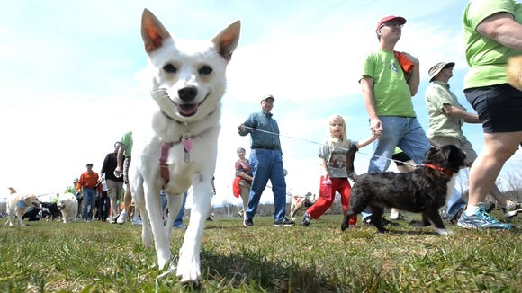 Hundreds of humans and dogs are expected at the sixth annual Run for the Paws 5K run and 1-mile dog walk Sunday at Fletcher Community Park to help benefit Brother Wolf Animal Rescue.