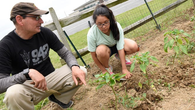 Geof Lambert helps Angielika Trinh, 15, of the  BOPIC summer program, tend to a row of peppers at the new COSTA Academy vegetable garden at The Orchards Restaurant, Chambersburg. Lambert is getting assistance with his food wellness program designed to teach gets gardening techniques.