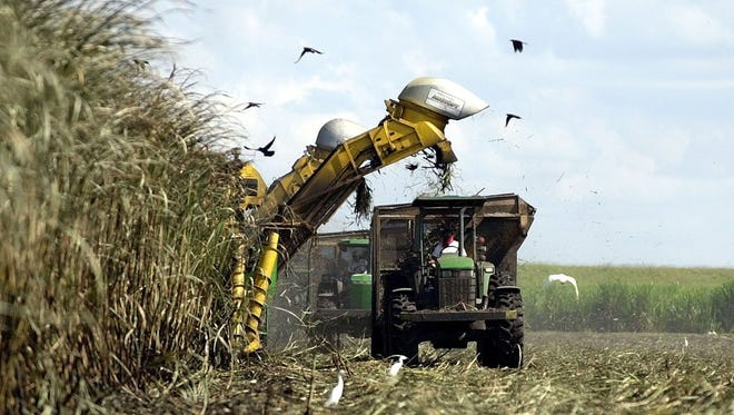 A mechanical harvester cuts sugar cane in a field outside of Clewiston, Fla., in 2001.