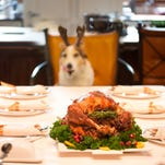 Thanksgiving for dogs: What not to feed your pet from a holiday table