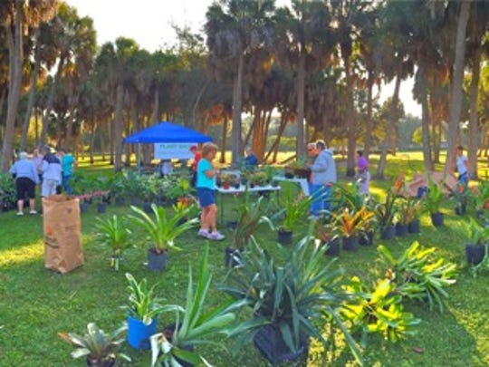 In addition to the landscape bromeliads, varieties of sansievieria, philodendron, heliconia rhizomes and herbs will be for sale at the Garden Club of Fort Pierce's MEGA Yard and Plant Sale on Saturday.
