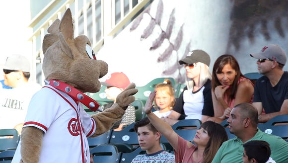 Chico the El Paso Chihuahuas mascot visits with fans