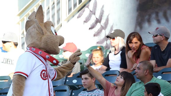 Chico the El Paso Chihuahuas mascot visits with fans at the start of their game with the Tacoma Rainiers Tuesday night at Southwest University Park.