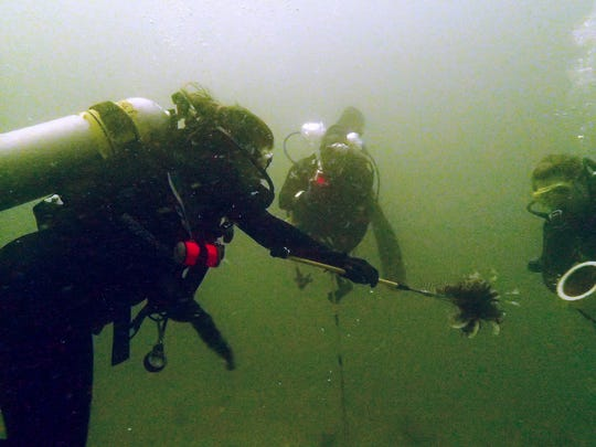 Members of the Recreational Underwater Sports Society on a Lion Fish Hunt.