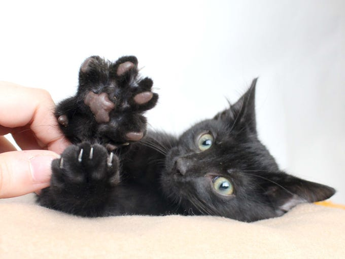 Brubeck is reaching for a new home! Adopt this sweetheart